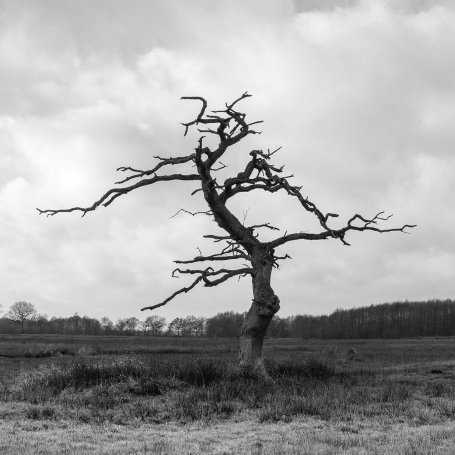 Associatie: Sprookjesboom