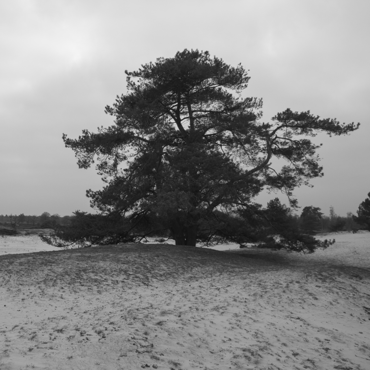 De serie laat bomen zien, die door stikstof zijn aangetast.